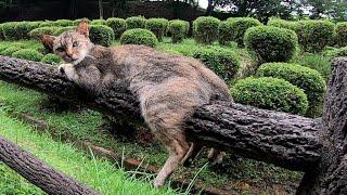 モノレール猫をナデナデする