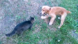 Битва собаки с котом Жесть!! Смотреть всем!