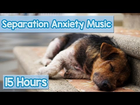 15 HOURS of Deep Separation Anxiety Music for Dog Relaxation! Helped