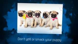 Puppy House Training Tips |  Puppy Potty Training Tips | Lab Puppy Training Tips | Crate