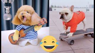 Entretenimiento mascotas, Tik tok animales chistosos y divertidos