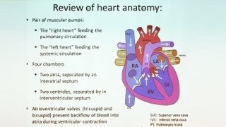 Follow Your Heart:  Anatomy of the Cardiovascular System Part II