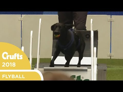 Flyball - Team Quarter-Finals Part 1 | Crufts 2018