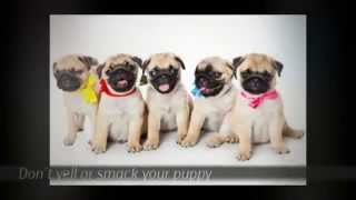 Puppy Potty Training Tips | Labrador Puppy Training Tips | Puppy Training Tips Biting