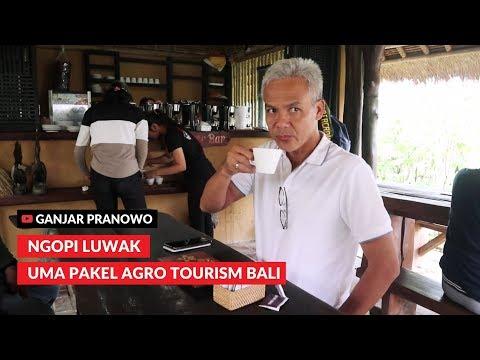 (ganjar-pranowo-vlog)-kopi-luwak-uma-pakel-agro-tourism-bali