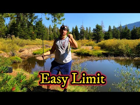 Lake Tahoe Trout Fishing