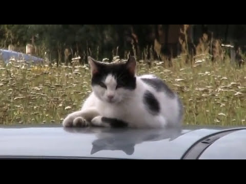 Пропуска и режим - Колючий Саров