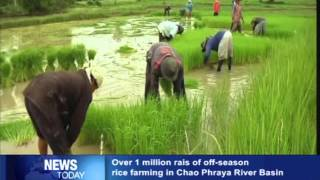 Over 1 million rais of off season rice farming in Chao Phraya River Basin