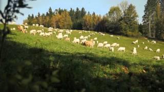 Uniwersytet Przyrodniczy we Wrocławiu - APPLE MELODY