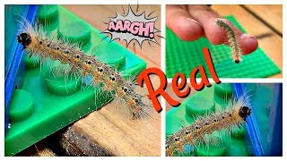 Kids Play with Caterpillars, Lego Jail for Insects