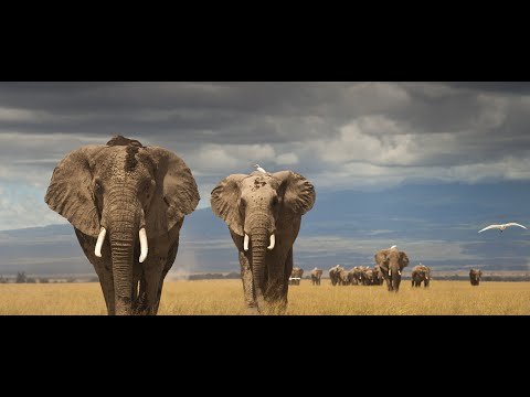 Beautiful World - The Beauty of African Wildlife (Marcus Warner - Africa) [Short Film]