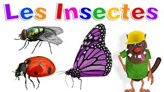 Apprendre aux enfants les Insectes (Learn Insects for Kids - Serie 01)