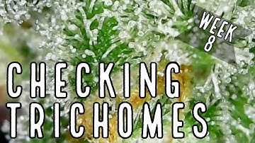 Week 8: How To Check Trichomes