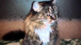 """Кошки ищут дом. Приют """"Искра"""" .mp4"""
