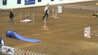 Remy - Miniature Poodle - Istt Standard Akc National Agility Championship
