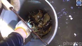 Bắt cua đá biển trong đêm phát hiện con này (phần 2)/catch crab