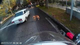 Помощь животным на дороге