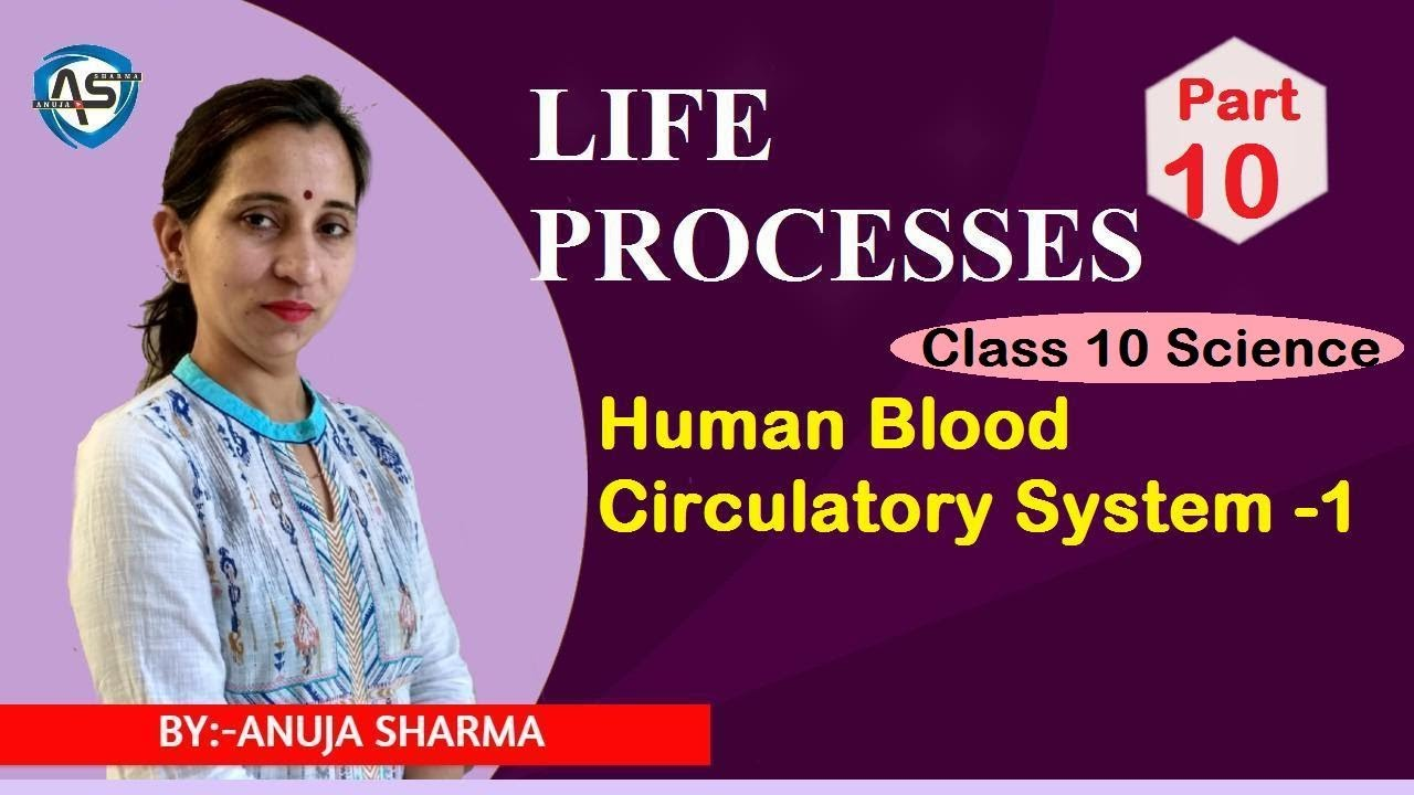 LIFE PROCESSES - HUMAN BLOOD CIRCULATORY SYSTEM- 1 - YouTube