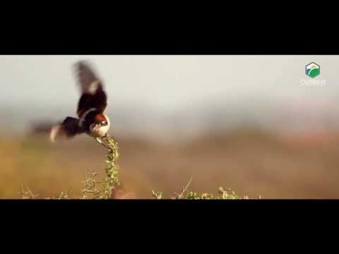 OurIsland cyprus nature & wildlife film Series  - stock footage #001