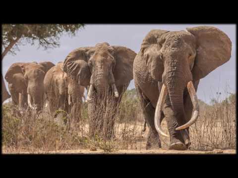 African Wildlife AIB Part 43