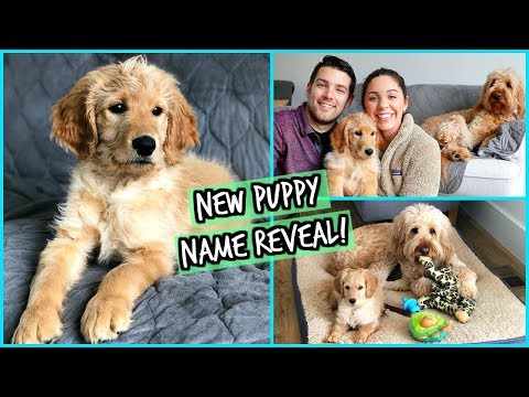 NEW PUPPY NAME REVEAL! & FIRST FEW DAYS TOGETHER!