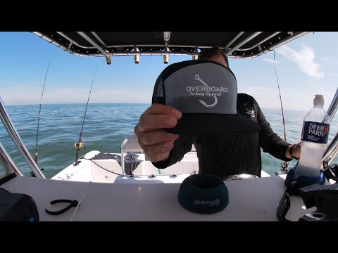 COBIA Fishing The Chesapeake Bay 2020