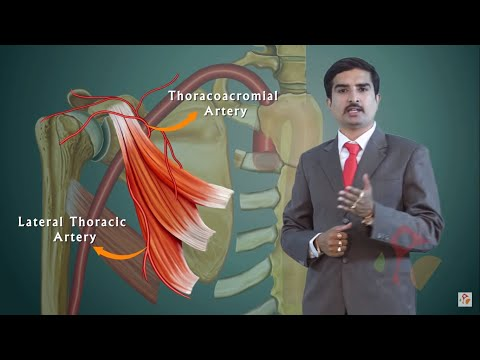 AXILLARY ARTERY ANATOMY ANIMATED LECTURE