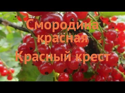 Смородина красная Красный крест (ribes Rubrum) 🌿 обзор: как сажать, саженцы смородины Красный крест