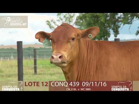 LOTE 12 CONQ 439