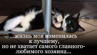 """Шаня-""""я не птичка,а кошка""""... КИЕВ"""