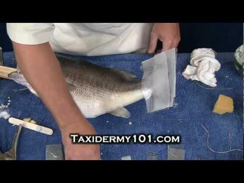 Taxidermy School Video- Fish Taxidermy - Bass Taxidermy