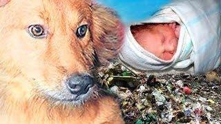 Пёс спас новорожденного ребёнка, выброшенного на помойку