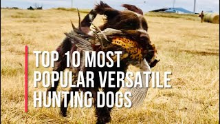 Top Ten Most Popular Versatile Hunting Dogs