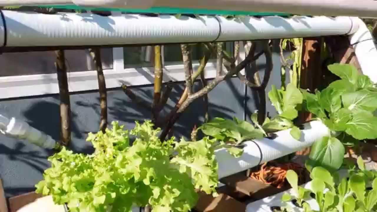 Genial DIY Backyard Hydroponic Garden