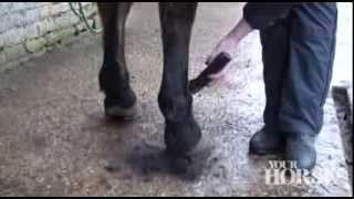 Trimming your horse | Your Horse
