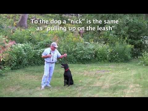 E Collar Conditioning For Labrador Retrievers, Golden Retrievers, Gun Dogs, Hunting Dogs