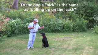 E Collar Conditioning For Labrador Retrievers, Golden Retrievers, Gun Dogs, Hunting Dogs