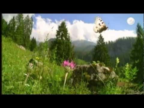 Ave Maria (Romance) Caccini - NATURE and classical music - Blu-ray HQ.mp4