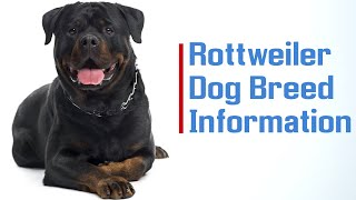 Rottweiler Dog Breed Information 'The Best Breed Ever '