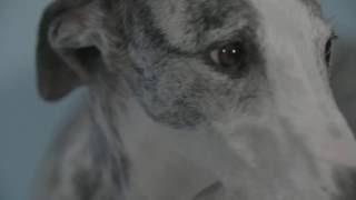 Retratos de perros y gatos - Laboratorios La Casa Encendida