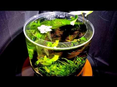 Необычный круглый аквариум