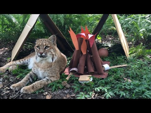 The Cats Go Camping
