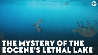 The Mystery of the Eocene's Lethal Lake