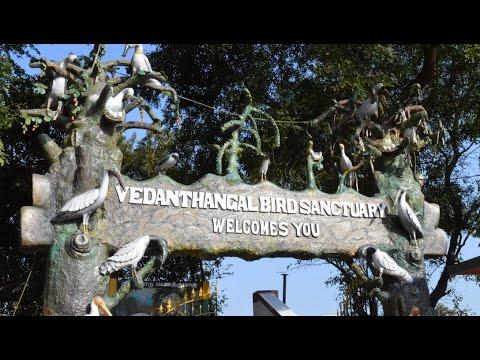 Detour Vedanthangal Bird Sanctuary...