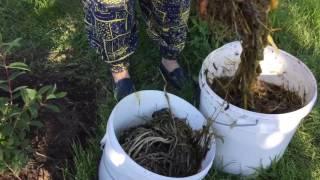 Gambar cover Как создать экспресс-компост на садовом участке