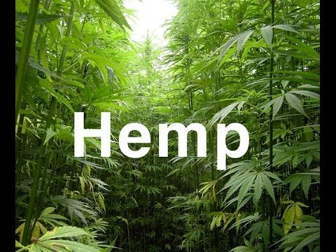 What Is Hemp | What Is Hemp Oil Benefits 2016