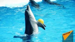 Шоу дельфинов в Батуми