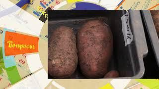 """СеДек """"Картофель"""". Совет дня."""
