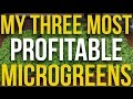 My 3 Most Profitable Microgreens