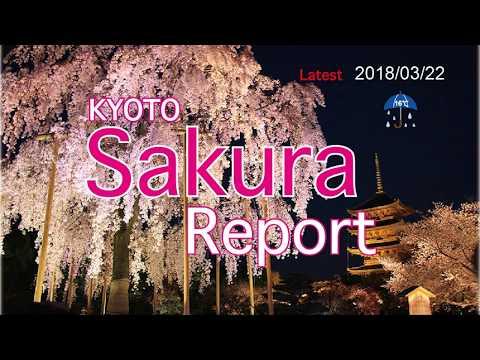 Kyoto Sakura report 2018/03/22